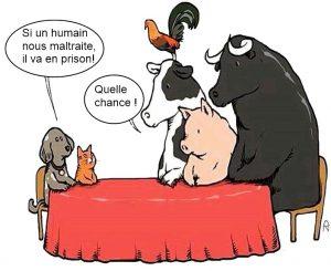 Pourquoi accordons-nous moins de droits aux animaux d'élevage ? La viande...