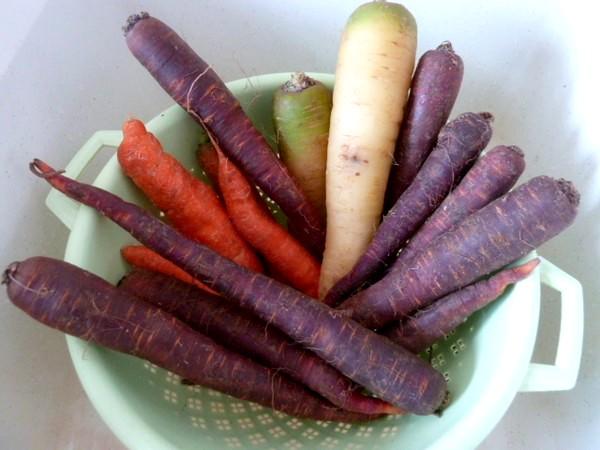 carottes-tricolores-aux-deux-celeris